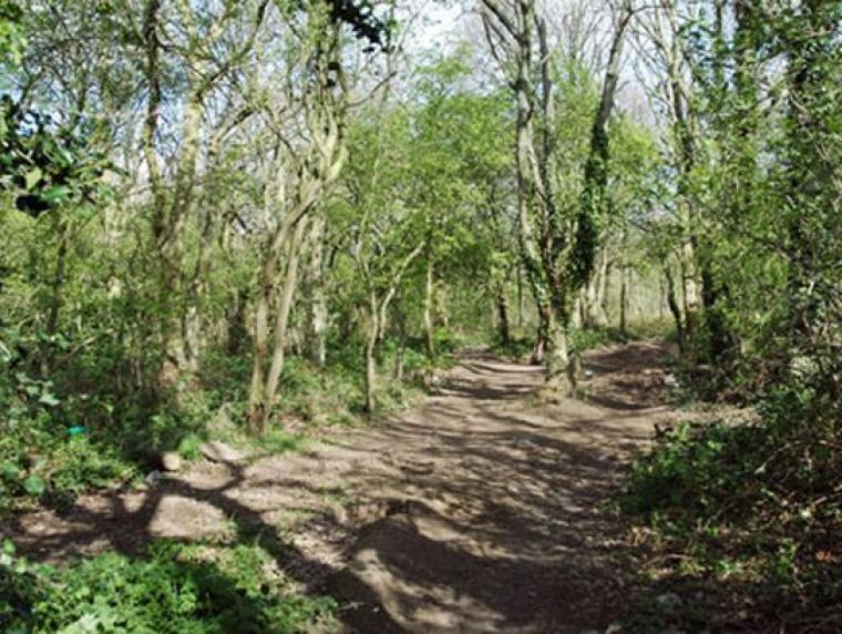 Thornaby Woods